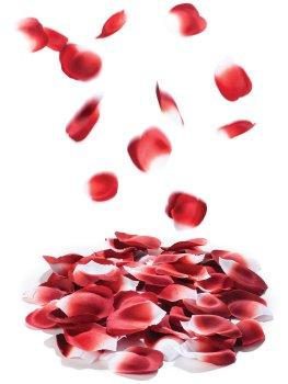 Romantické okvětní lístky růží – Erotické pomůcky pro něžné SM