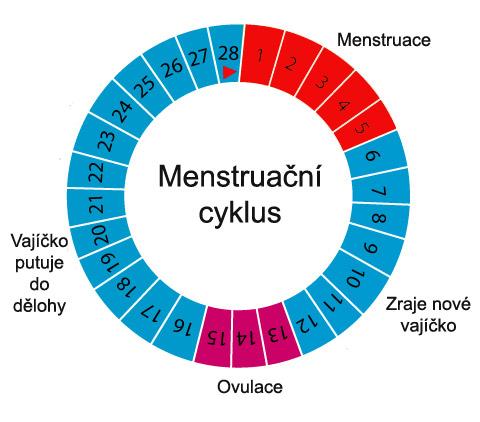 Při zjištování plodných a neplodných dní je potřeba znát svůj menstruační cyklus.