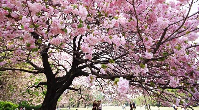 Vyhlídněte si pěkný strom, někde stranou civilizace a lidí a můžete to hezky rozjet
