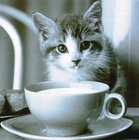 Muži zbožňují koťátka, která si jejich mlíčko gurmánsky vychutnávají