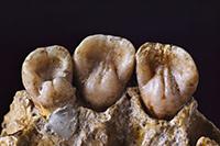 Ženy ve středověku měly u sebe nosit dětské zuby, aby zabránily nechtěnému otěhotnění.