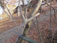 1. najdeme vhodnou větvičku ve tvaru písmene Y