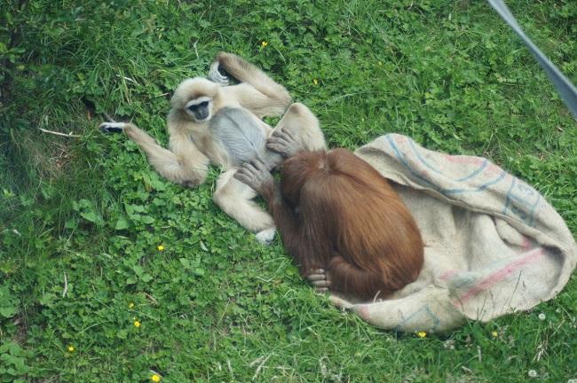 I k tomu největšímu opičákovi existuje partnerka, která pro něj bude tou nejkrásnější, nejepší a nejvoňavější.