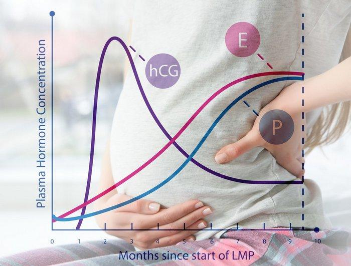 hladina progesteronu během těhotenství